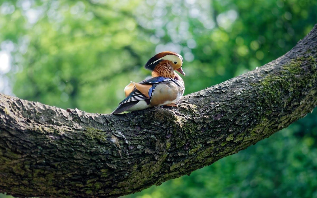 drzewo, dzika przyroda, dziki