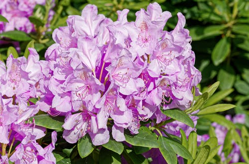 꽃, 다발, 바이올렛, 분홍색의 무료 스톡 사진