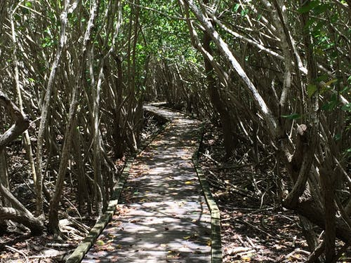 Free stock photo of boardwalk, Francis Bay, mangroves