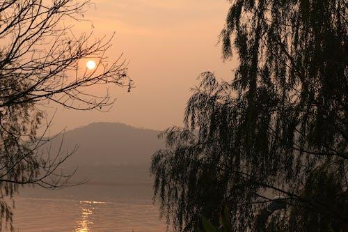 açık, ağaçlar, dallar, deniz içeren Ücretsiz stok fotoğraf