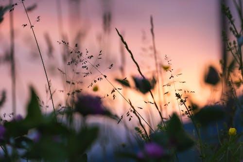 Fotos de stock gratuitas de al aire libre, amanecer, calma, campo