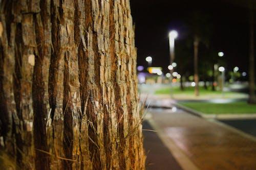 Fotobanka sbezplatnými fotkami na tému noc, strom