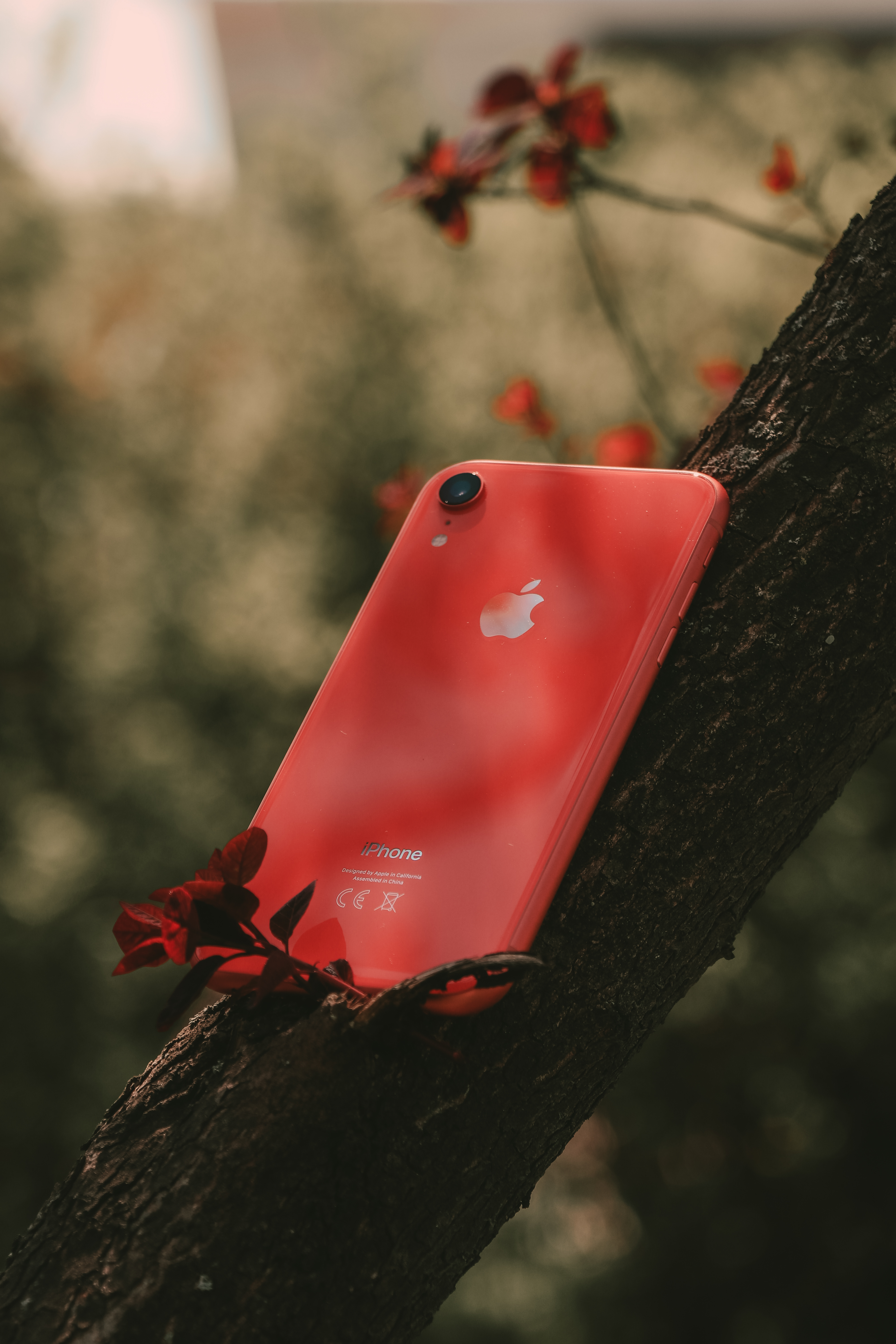 Product Red Iphone 7 on Tree