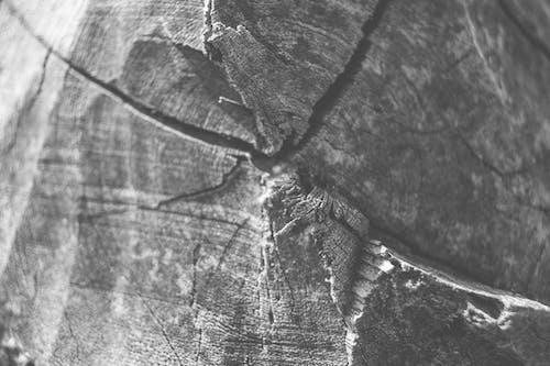 Imagine de stoc gratuită din abraziv, alb-negru, artă, aspect