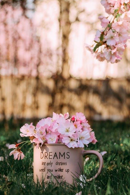 Бесплатное стоковое фото с весна, вишня, лепестки, лето