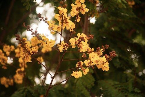 Fotos de stock gratuitas de amarillo, árbol, Flores amarillas, Flores de primavera