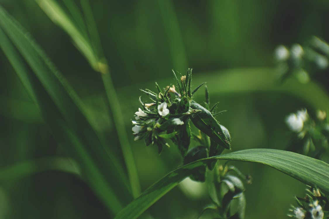 Shallow Focus Photography of Green-leafed Plants With White Flowers