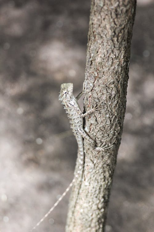 Shallow Focus Photo of Gray Lizard