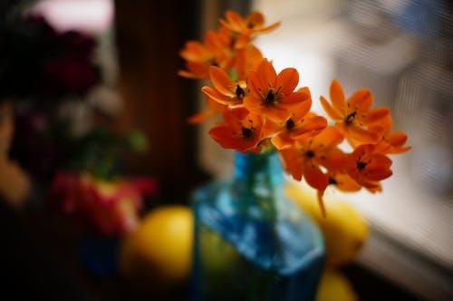 ビンテージ花瓶, フラワーズの無料の写真素材