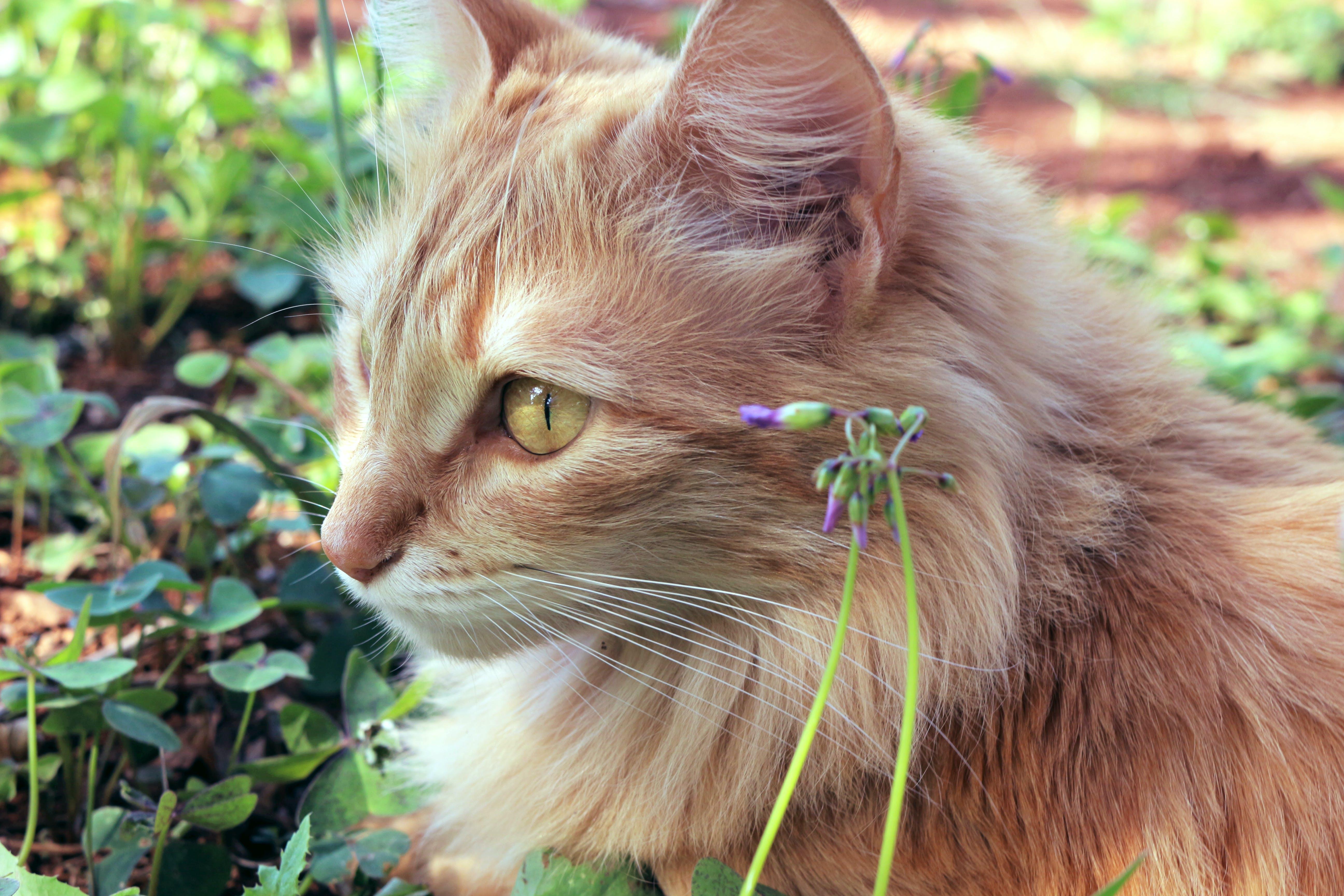 Cat Beside Purple Flower Bud