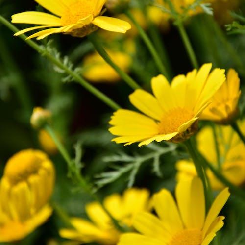Fotobanka sbezplatnými fotkami na tému kvety farby jarné obdobia