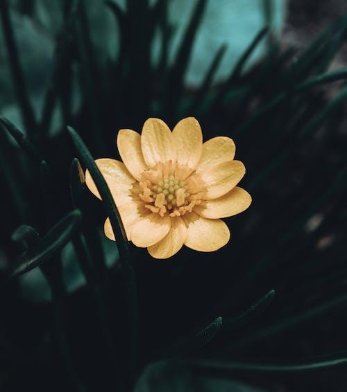 노란 꽃, 봄 꽃, 자연, 초록 풀의 무료 스톡 사진