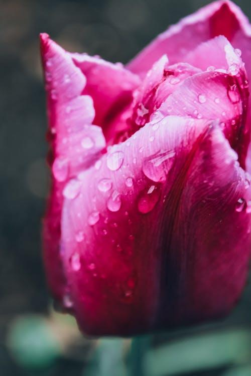 Photos gratuites de fleur de printemps, gouttes de pluie, nature, pluie