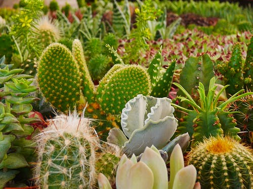Fotobanka sbezplatnými fotkami na tému kaktus