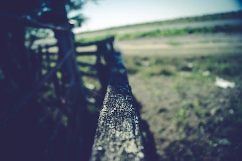 原本, 围栏, 天性, 小路 的 免费素材照片
