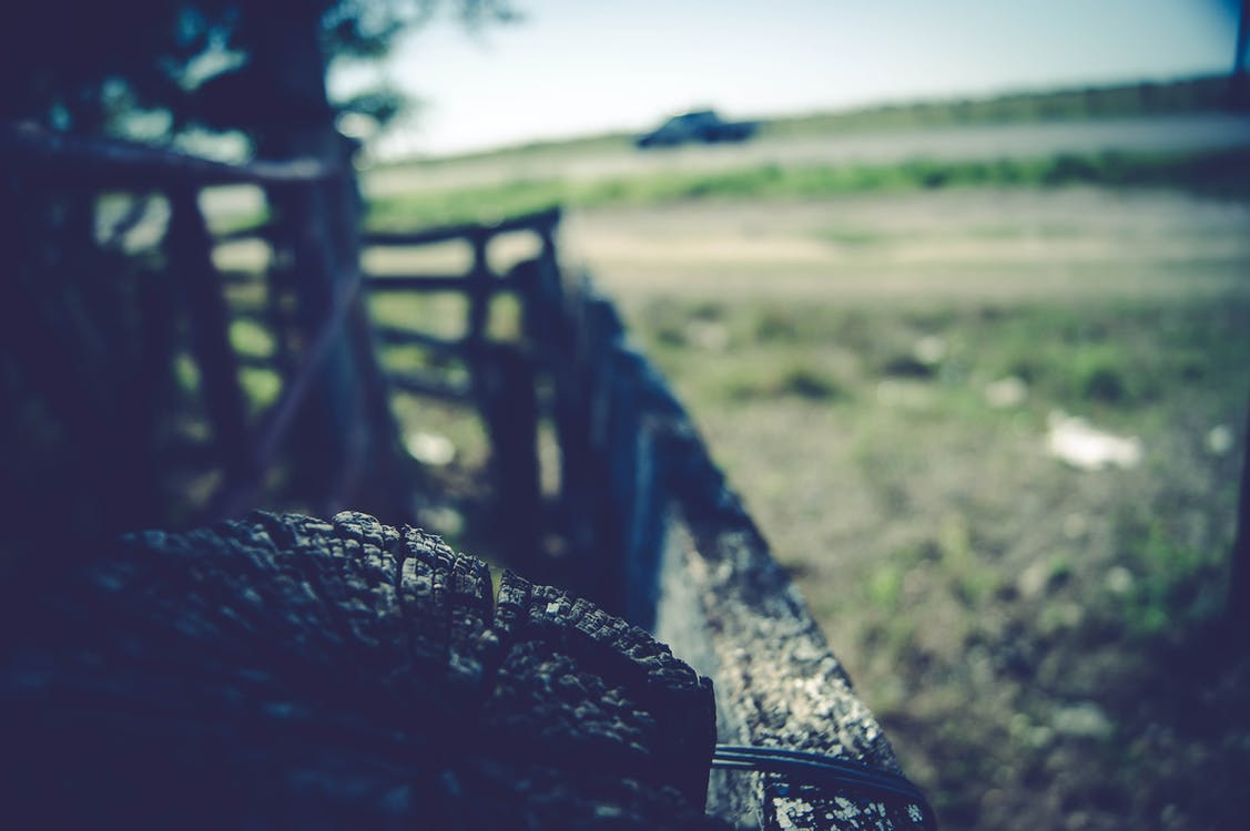 Shallow Depth of Field Photo of Log
