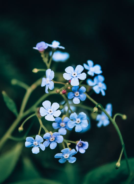 Selective Focus Photography of Blue-petaled Flowers