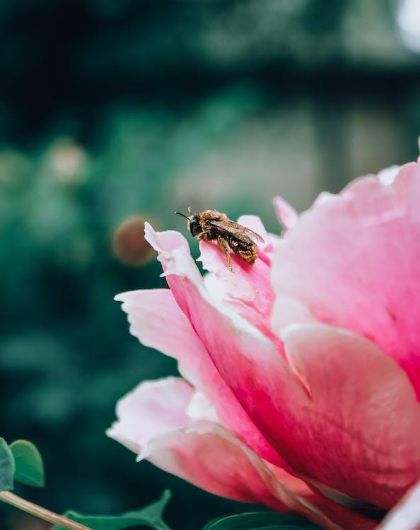 abeille, délicat, fleur
