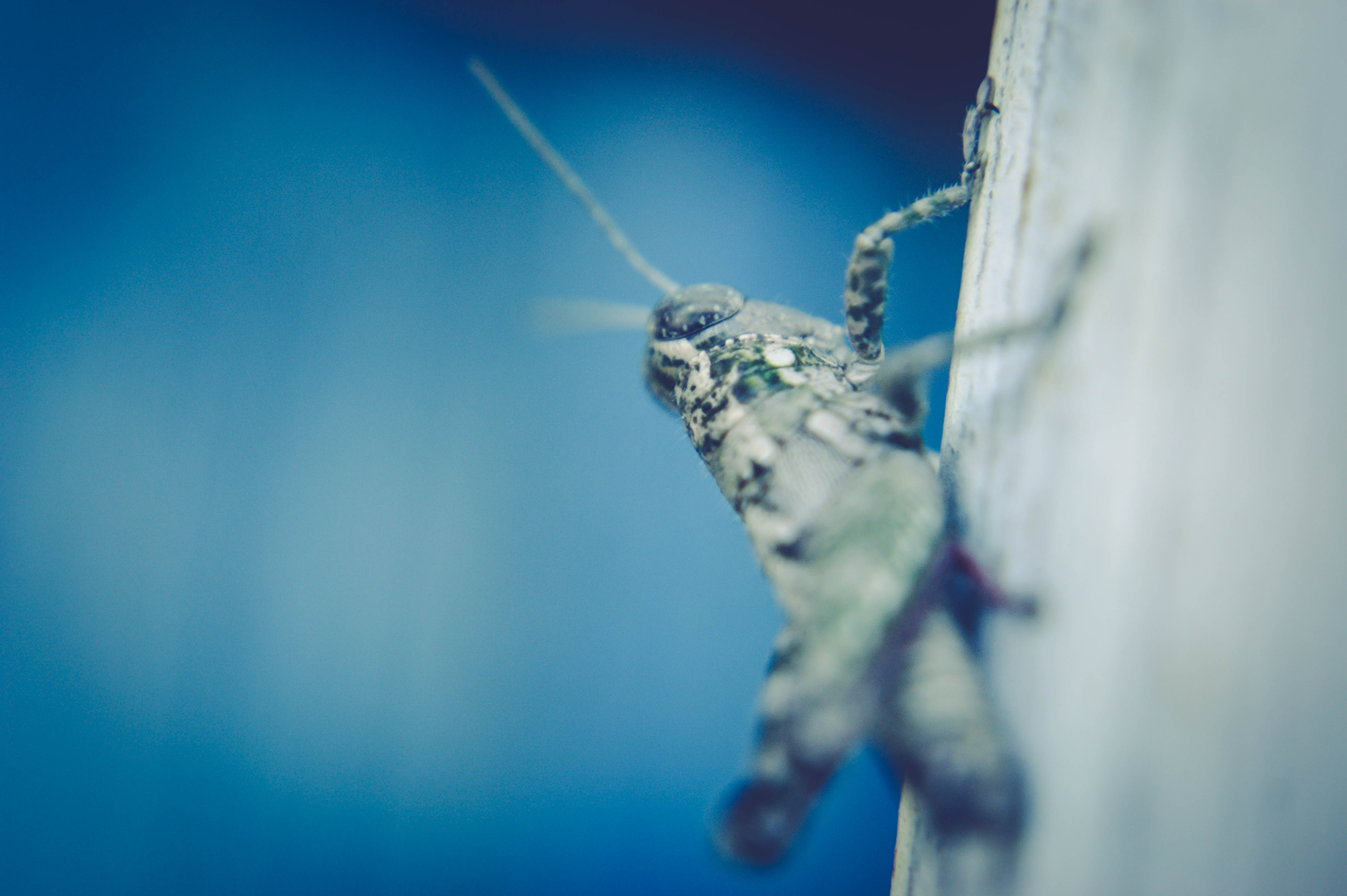 Selective Focus Photography of Grasshopper on Surface