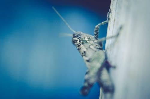 Základová fotografie zdarma na téma denní světlo, hmyz, kriket, lehký