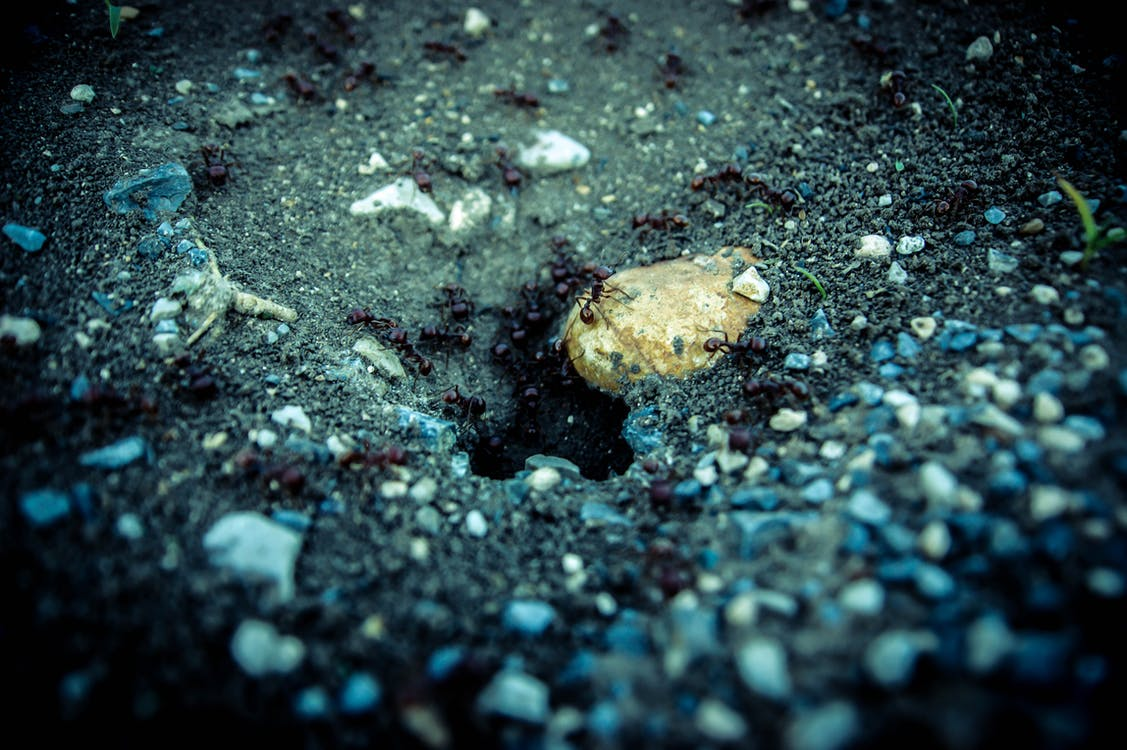 Brown Stone on Black Sand