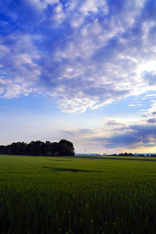 Foto profissional grátis de área, atraente, campo de grama, campo verde