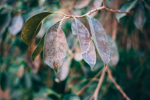 Ingyenes stockfotó ág, esés, évszak, fa témában