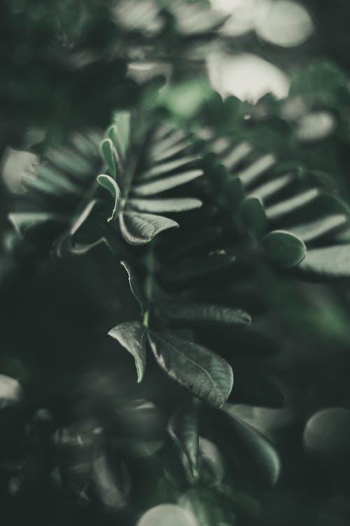 가지, 나무, 녹색, 색깔의 무료 스톡 사진