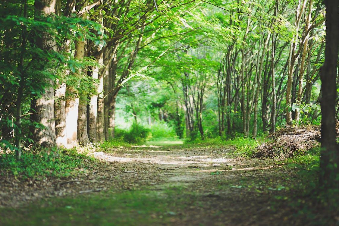 Путь желаний, окруженный деревьями и травой