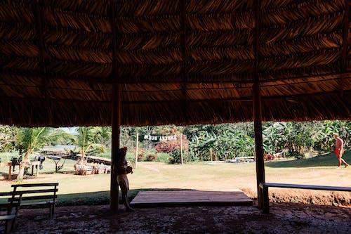 ココナッツの木, ビーチチェア, ファッション, ポーズの無料の写真素材