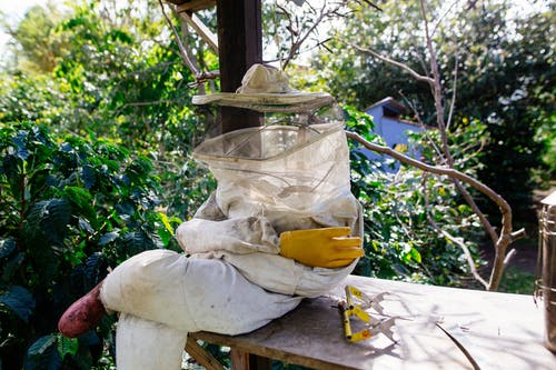 Free stock photo of beekeeping, bees, boquete, central america