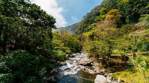 Fotobanka sbezplatnými fotkami na tému balvany, boquete, cestovať, dažďový prales