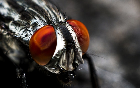 Desktop background of eyes, insect, macro, fly