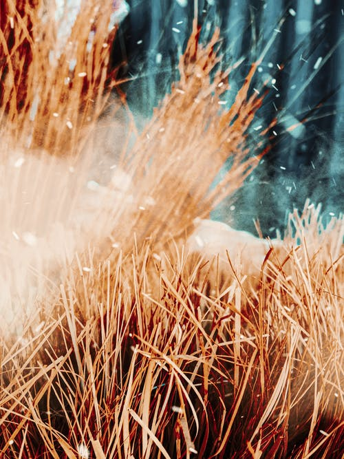 Gratis lagerfoto af fokus, græs, HD-baggrund, lavt fokus