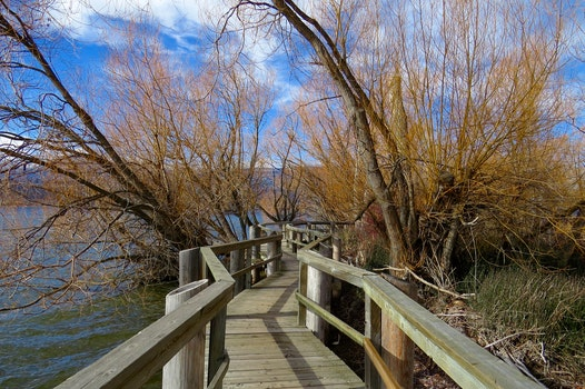 Free stock photo of wood, landscape, water, ocean