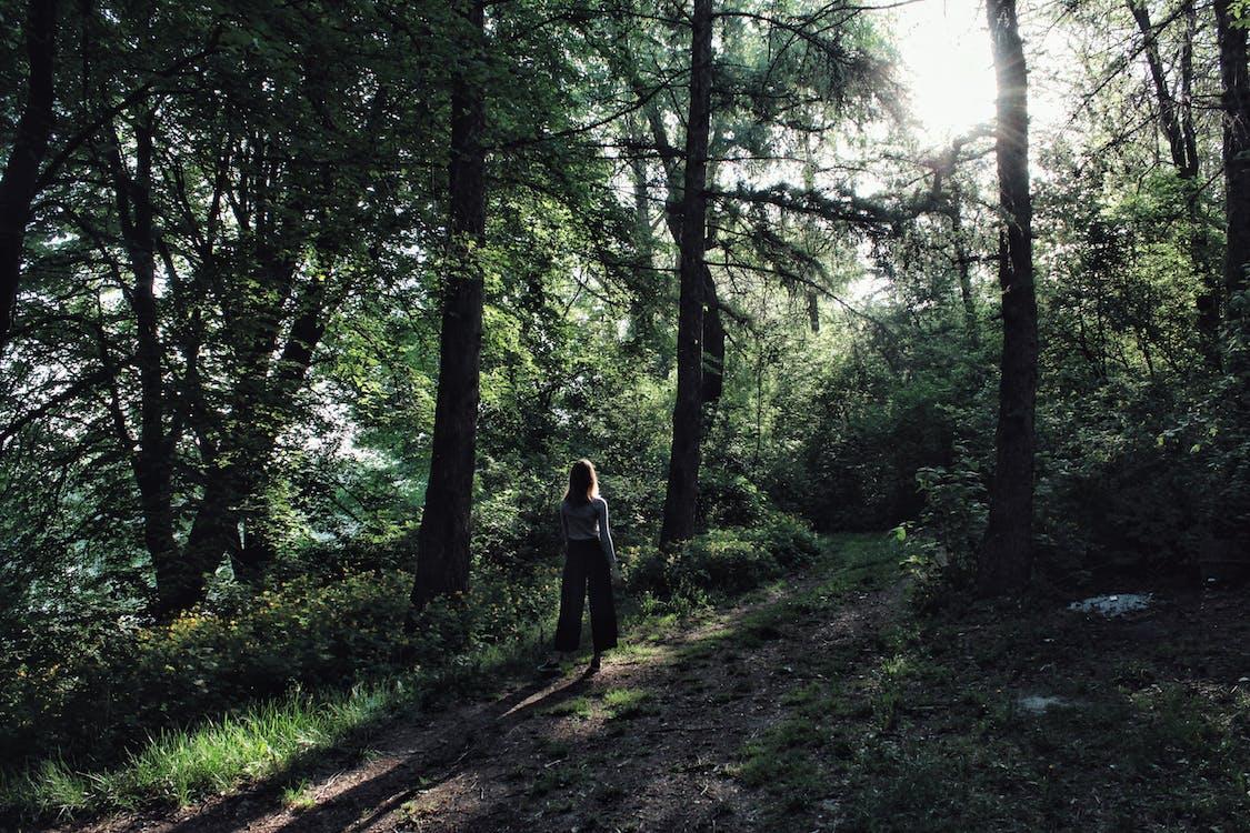 äventyr, dagsljus, gående