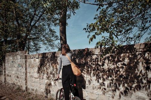 Fotos de stock gratuitas de al aire libre, árbol, bici, bicicleta