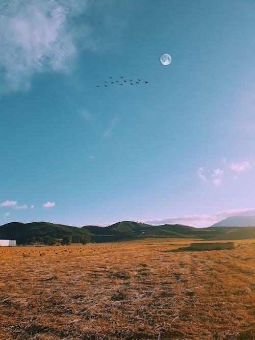 Δωρεάν στοκ φωτογραφιών με γαλάζιος ουρανός, ηρεμία, κίτρινη, πουλί