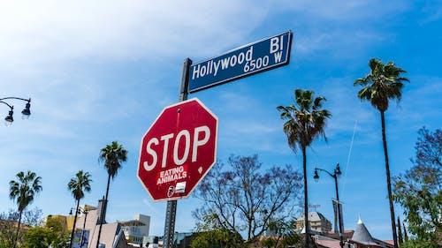 Photos gratuites de hollywood, palmiers, panneau stop