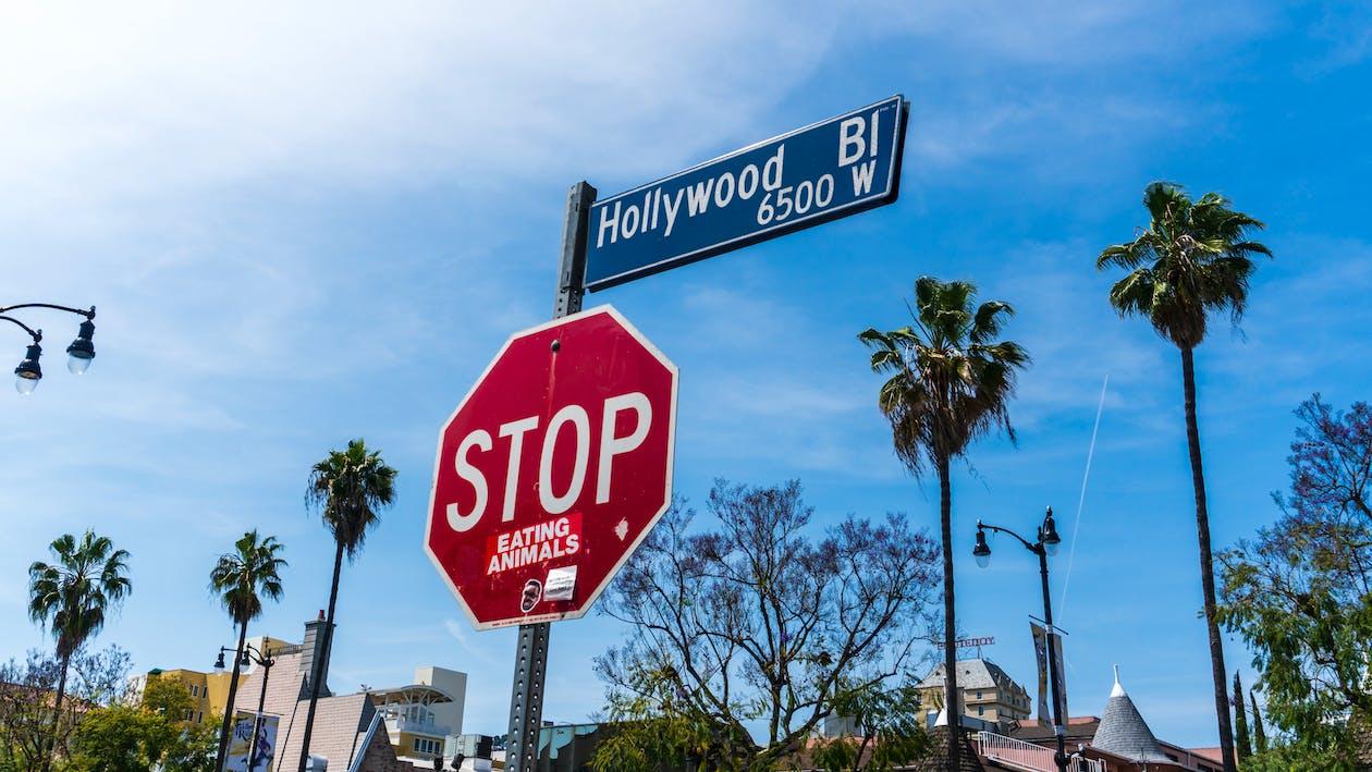 停止標誌, 好萊塢, 棕櫚樹
