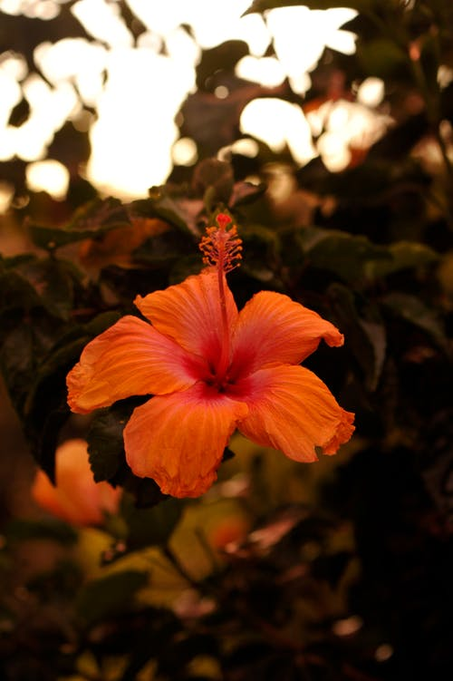 çiçek, pembe, Portakal, yeşil içeren Ücretsiz stok fotoğraf