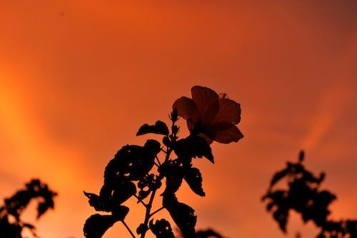 çiçek, Portakal, turuncu gökyüzü içeren Ücretsiz stok fotoğraf
