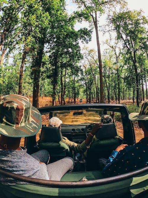Foto d'estoc gratuïta de arbres, aventura, conducció, cotxe