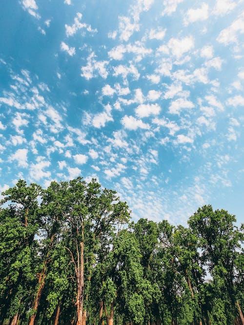 경치, 나뭇잎, 농촌의, 새벽의 무료 스톡 사진