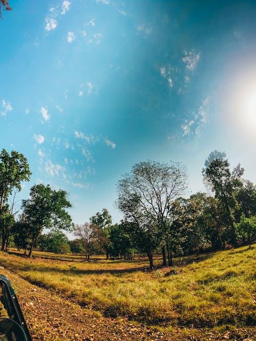 Foto profissional grátis de ao ar livre, área, árvores, aumento