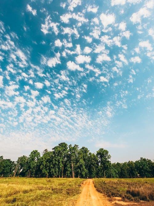 Photos gratuites de arbres, campagne, chemin de terre, ciel bleu