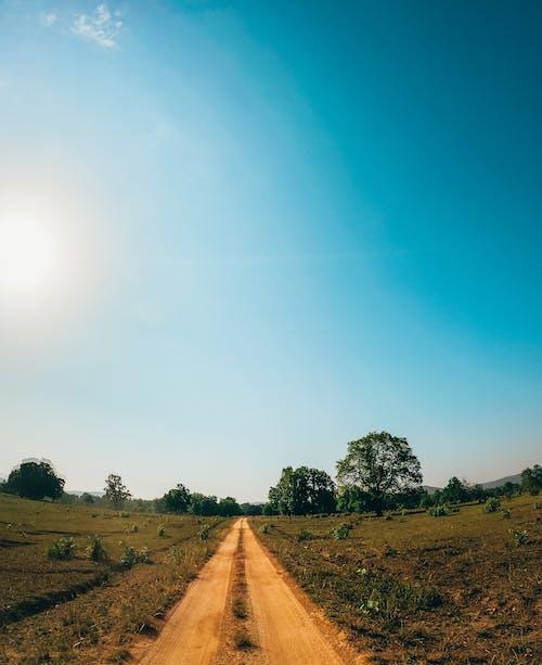 增長, 夏天, 天性, 天空 的 免費圖庫相片