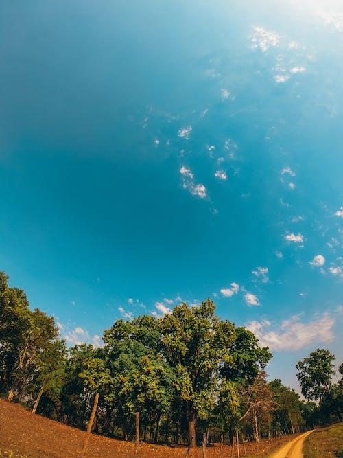 Ingyenes stockfotó ég, fák, perspektíva, út témában
