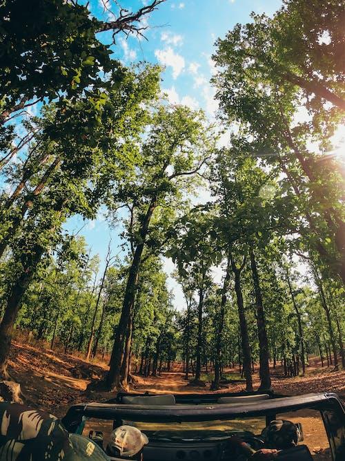Ingyenes stockfotó alacsony szögű felvétel, alacsony szögű fényképezés, autózás, erdő témában