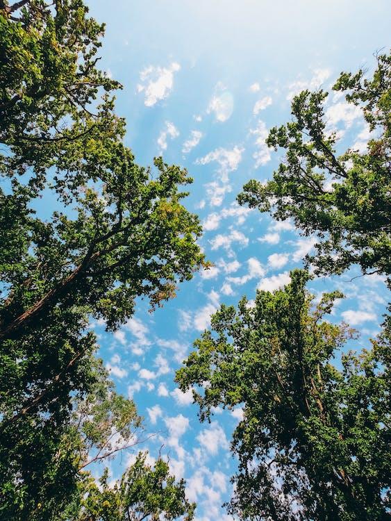 дерева, жаб'яча перспектива, Перспектива